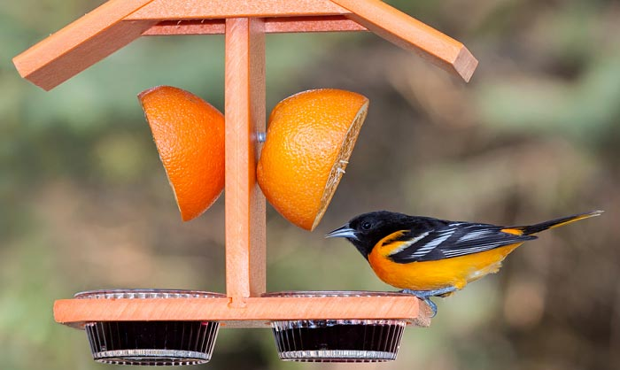 best-oriole-feeder-with-bee-guard