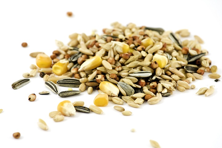 Bird-Seed-Buying-Guide