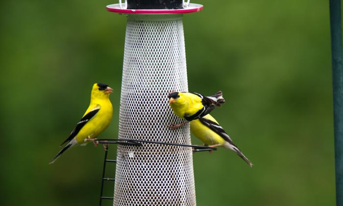best-goldfinch-feeder