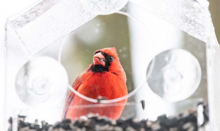 best window bird feeder