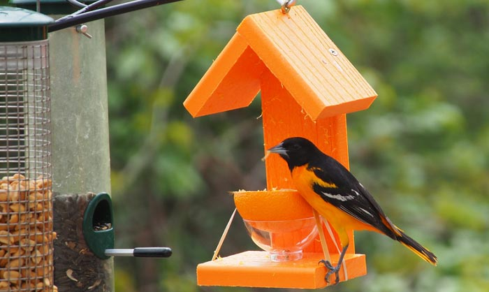 perky-pet-oriole-feeder