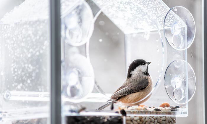 5 Best Window Pet window box bird feeder Feeders For Sharp Viewing