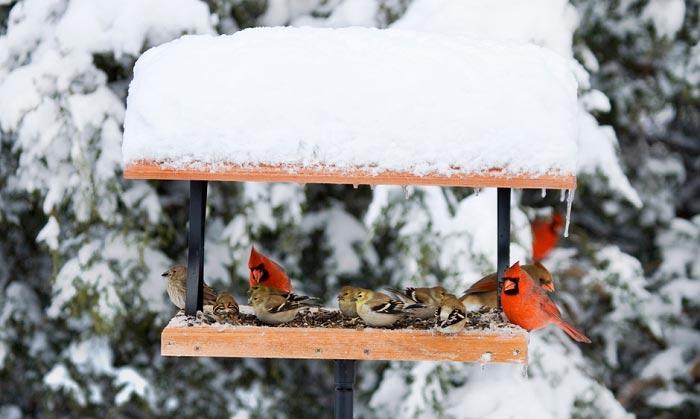 squirrel-proof-cardinal-bird-feeder