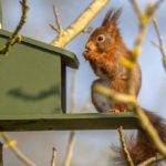 best squirrel feeder