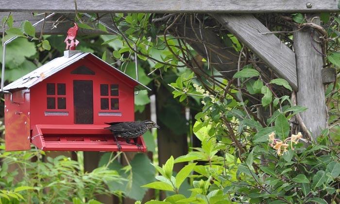 best-squirrel-proof-bird-feeder
