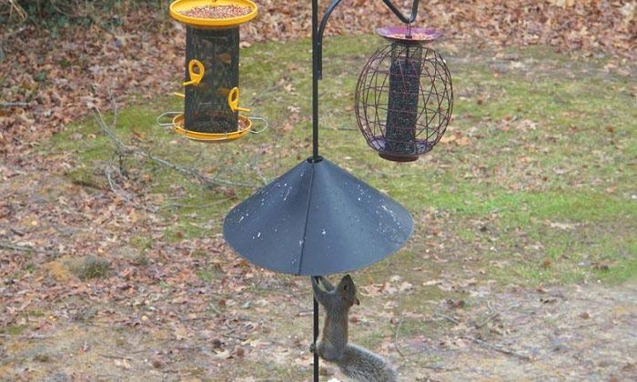 squirrel baffles for hanging bird feeders
