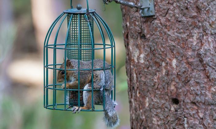 squirrel-proof-bird-feeder-reviews