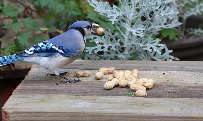 best bird feeder for blue jays