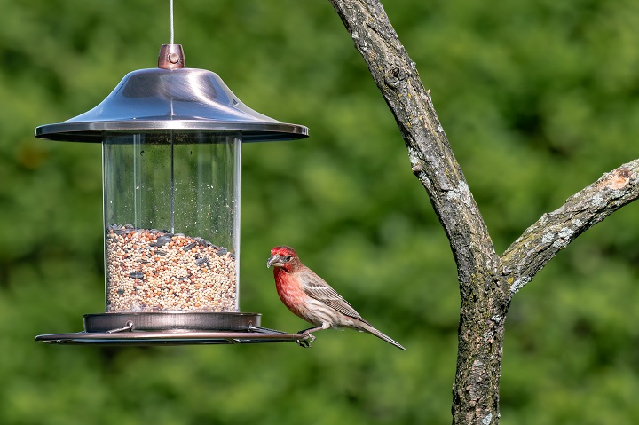Best-Bird-Feeder