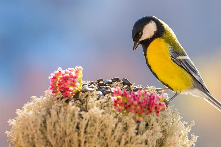 Best-Bird-Seed