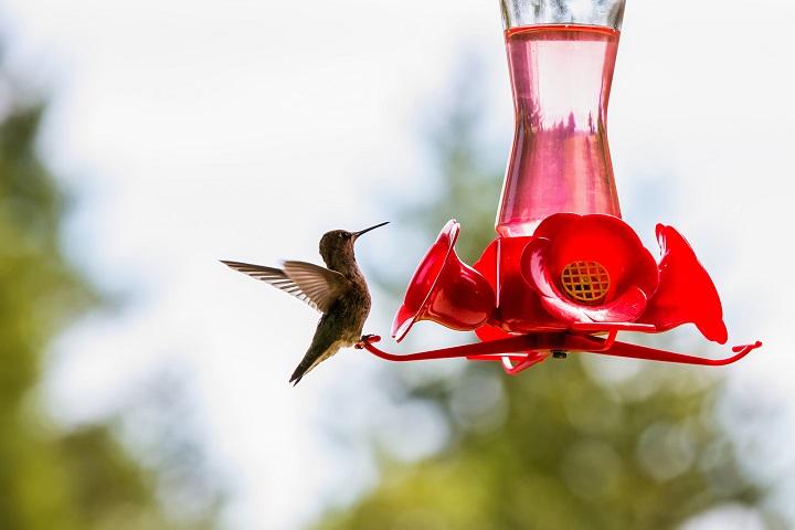 Hummingbird-Feeder-Buying-Guide