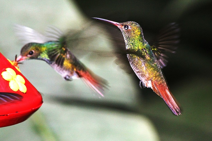 What-do-Hummingbirds-Eat